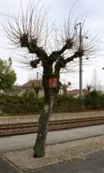 Hinweisschilder/3980/damit-beim-reservierungspflichtigen-tgv-die-reisenden Damit beim reservierungspflichtigen TGV die Reisenden bereits vor der Einfahrt ihres Zuges wissen, wo ihr Wagen zum Stehen kommt, hat die SNCF kleine Hinweisschilder aufgestellt. Dass jedoch ein solches Hinweisschild, wie hier in Frasne, an einem Baum befestigt wird, ist aber doch die Ausnahme... Frasne, den 12. November 2008